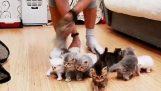 Você pode tirar fotos com 10 gatinhos;