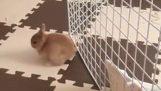 Bunny escaped