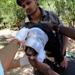 Η εκπληκτική ανάρρωση ενός πολύ σοβαρά τραυματισμένου σκύλου