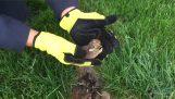 बगीचे में एक खरगोश घोंसला