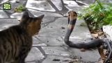 Γάτες που δεν φοβούνται τίποτα