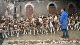 120 κυνηγόσκυλα ταΐζονται ταυτόχρονα
