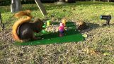 Attaques d'écureuil avec un ressort