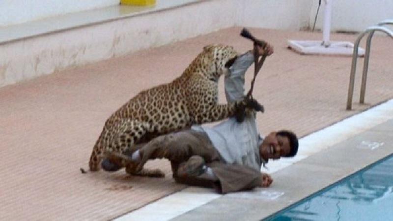 Ne day часы леопард