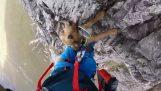 Ορειβασία παρέα με ένα σκύλο