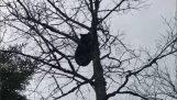 Bear avenges a hunter