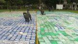कोकीन के 12 टन कोलम्बिया में पुलिस द्वारा जब्त