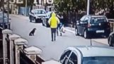 Stray dog ​​saves a woman from Thief
