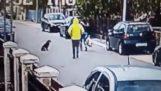 Αδέσποτος σκύλος σώζει μια γυναίκα από κλέφτη