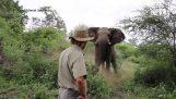 Ψύχραιμη αντίδραση στην επίθεση ενός ελέφαντα