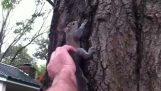 De release van de eekhoorn