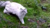 Η Σούπερ-γάτα
