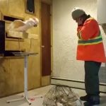 Ποτέ μην πειράζεις το σπίτι ενός παπαγάλου