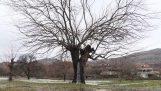 Το δέντρο που αναβλύζει νερό