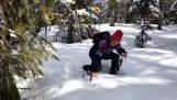 एक Capercaillie बर्फ के नीचे छिपा (नॉर्वे)