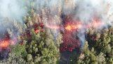 Το ηφαίστειο Kilauea δημιουργεί ρωγμές λάβας στο δάσος (Χαβάη)