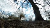 Squirrel stealing a GoPro camera and pulls impressive shots