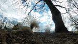 Σκίουρος κλέβει μια κάμερα GoPro και τραβά εντυπωσιακά πλάνα