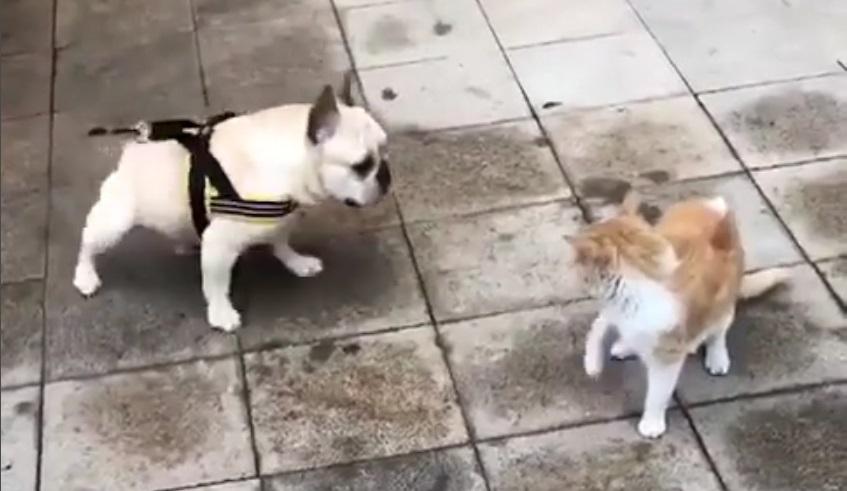 """Képtalálat a következőre: """"veszekedő kutya-macska"""""""