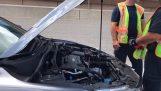 Διασώζοντας ένα γατάκι που τρύπωσε σε κινητήρα αυτοκινήτου