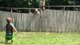 A small child playing with a dog behind a fence