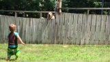 Малко дете си играе с кучето зад ограда