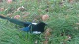 Το μεθυσμένο πουλί