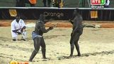 Wildes Duell in Senegal