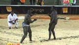 在塞内加尔野生对决
