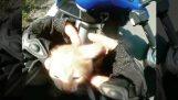 Motociclista y el conductor del autobús rescatar a un gatito