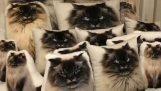 Kočka za polštáře