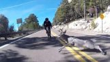 Cyclist collides with deer