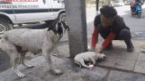 Frustrovaní mamička plače pre zranené šteňa