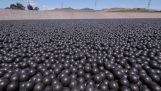Why are placed 96.000.000 balls into a drinking water tank;
