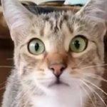 Μια γάτα βλέπει ταινία τρόμου
