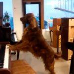 Ένας σκύλος σε κατάστημα με πιάνα