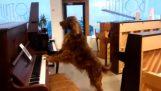 Куче в магазин за пиана