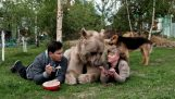 Family living with a bear for 23 years