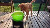 Le nouveau jouet pour chien