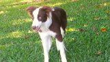 Ένας σκύλος τρώει κατά λάθος παραισθησιογόνα μανιτάρια