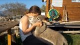 Hugs bir eşek ile