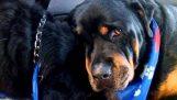 Ένας σκύλος θρηνεί τον θάνατο του αδελφού του