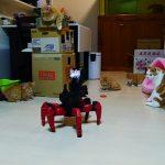 Το ρομπότ παίζει με τις γάτες