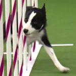 Ο σκύλος πρωταθλητής