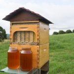 Μέλι κατευθείαν από την κυψέλη με μια πανέξυπνη εφεύρεση