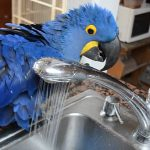 Ο παπαγάλος κάνει ένα ντους