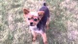 Рапър куче