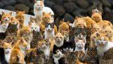 जापान में बिल्लियों के साथ द्वीप