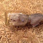 Το γατάκι ακροβάτης στο βάζο