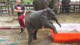 Nieudolny słoń kąpać